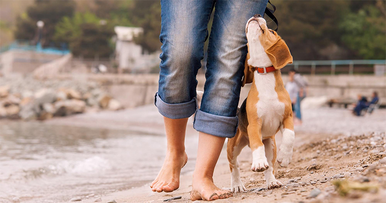 Top 10 Places to Take Your Pet on the Eest Coast
