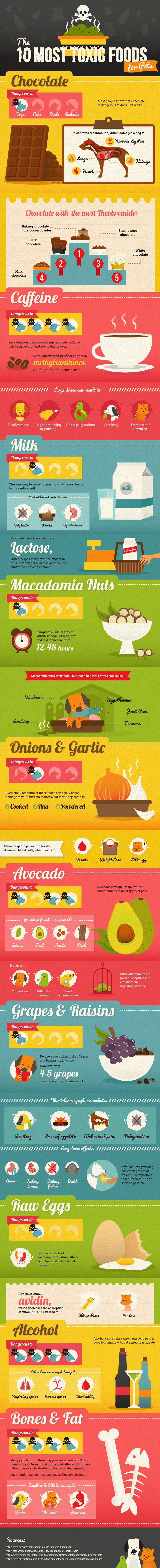 Toxic Foods for Pets Infographic