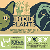 link to Toxic Plants - How Houseplants Can Harm Pets