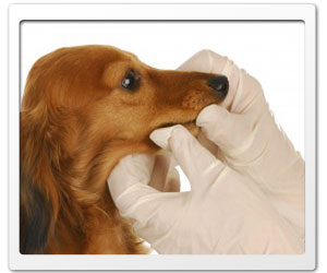 Who doesn't fear physicians? Dog's certainly sometimes do.