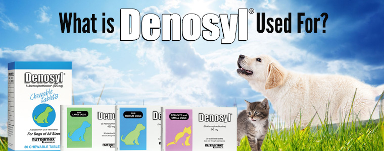 What is Denosyl Used For? banner features images of all Denosyl products and kitten and puppy.