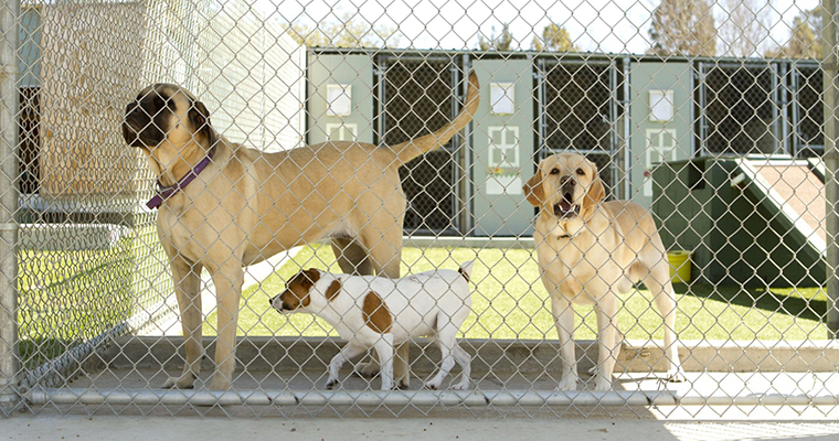A image of a 3 dogs locked in the cage