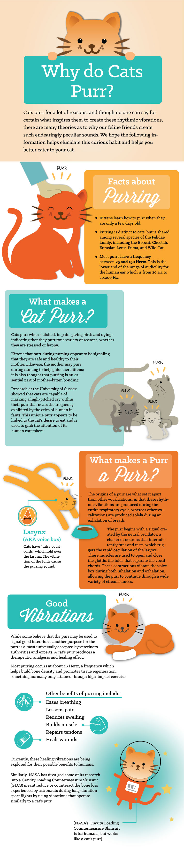 Why Do Cats Purr? An EntirelyPets Infographic by Rachel Martin.