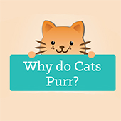 link to Why Do Cats Purr?