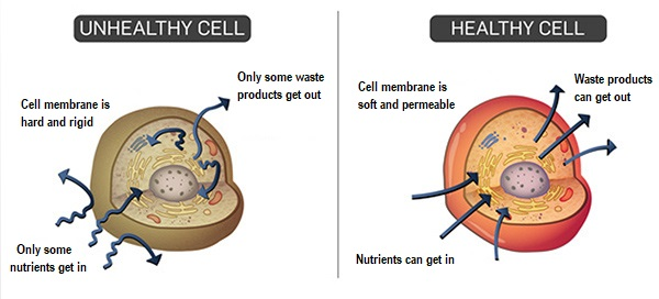 Healthy cells verses unhealthy cells