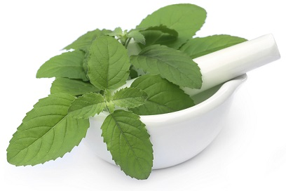 gout and basil