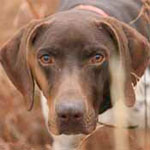 dog training collars shock Sage how well they work
