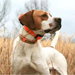 dog tracking collars help us keep up with Click, Steve's English pointer