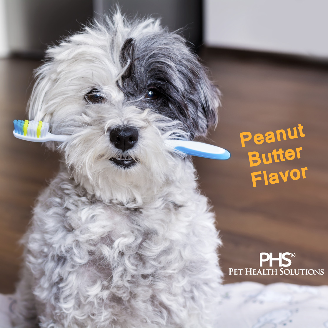 Dog holding a toothbrush; Peanut Butter Flavor; PHS Pet Health Solutions