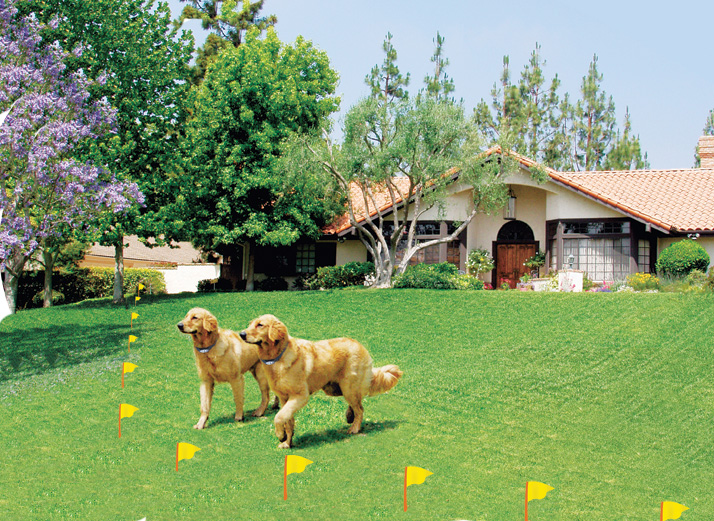 Humane Contain Electronic Dog Fence World S Best Electric