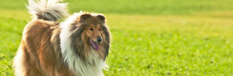 Anti-Shedding Solutions for Pets