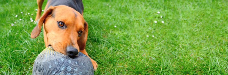 Balls and Fetch Toys for Dogs on Sale