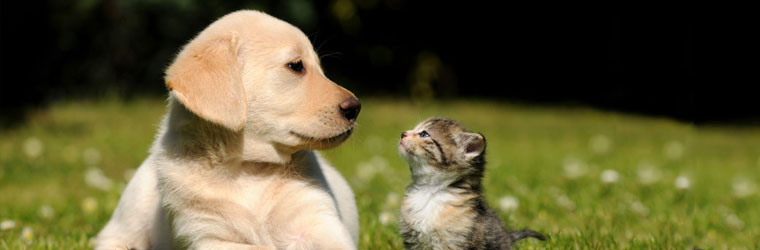 Ear and Eye Products for Pets