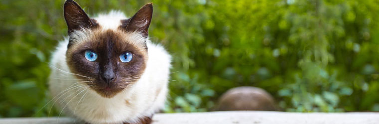 Eye Cleansers and Treatments for Pets