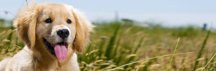 Fish oil and omega supplements for pets