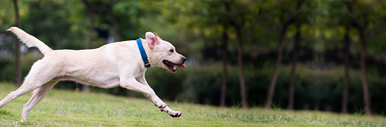 Supplements for pets with hip and joint problems