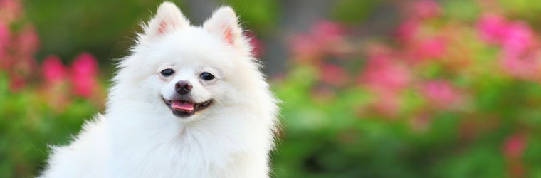 Tear Stain Product Solutions for Pets