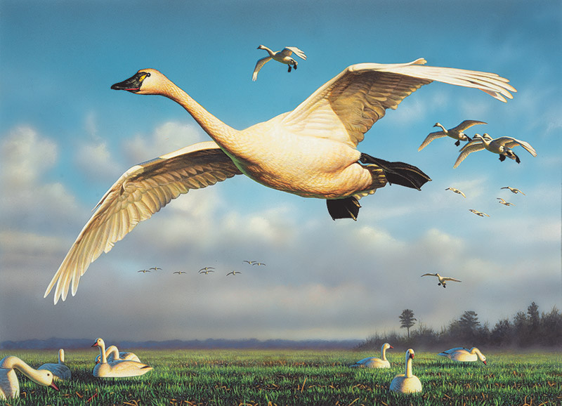 2020 N.C. Waterfowl Conservation Print and Stamp