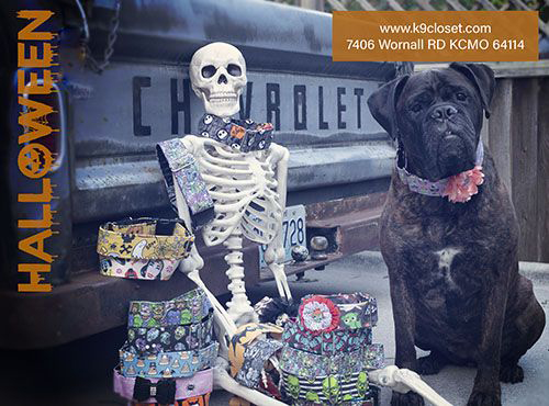 Wornall Halloween 2020 k9 closet * style and comfort for the savvy pet