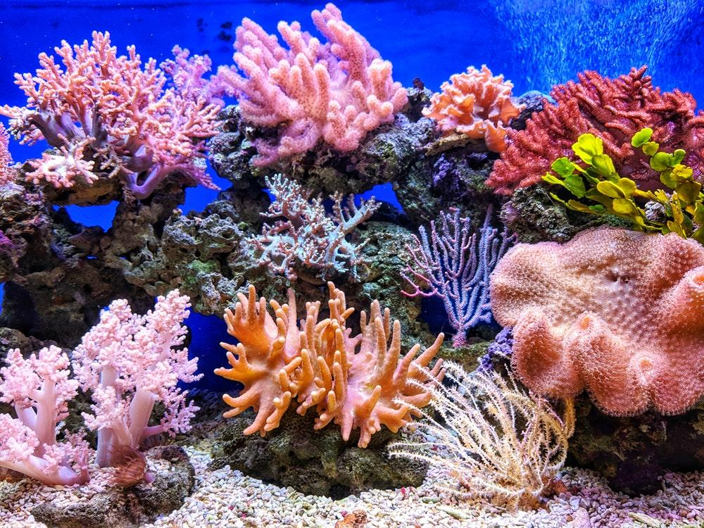 Save the coral reef by using safe sunscreen