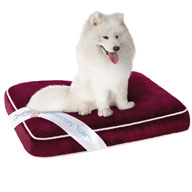 Beautyrest Comforpedic Deluxe Medium Orthopedic Napper Pet Bed