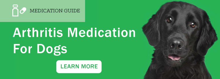 Arthritis Medication for Dogs Article