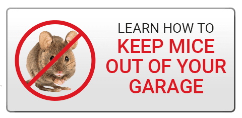 Learn How to Keep Mice Out of Your Garage