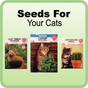 Buy Seeds for Cats