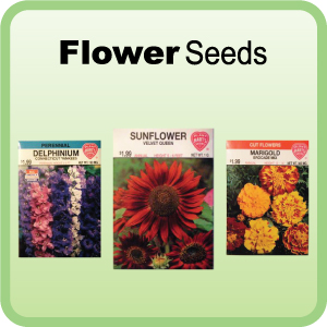 Buy Flower Seeds