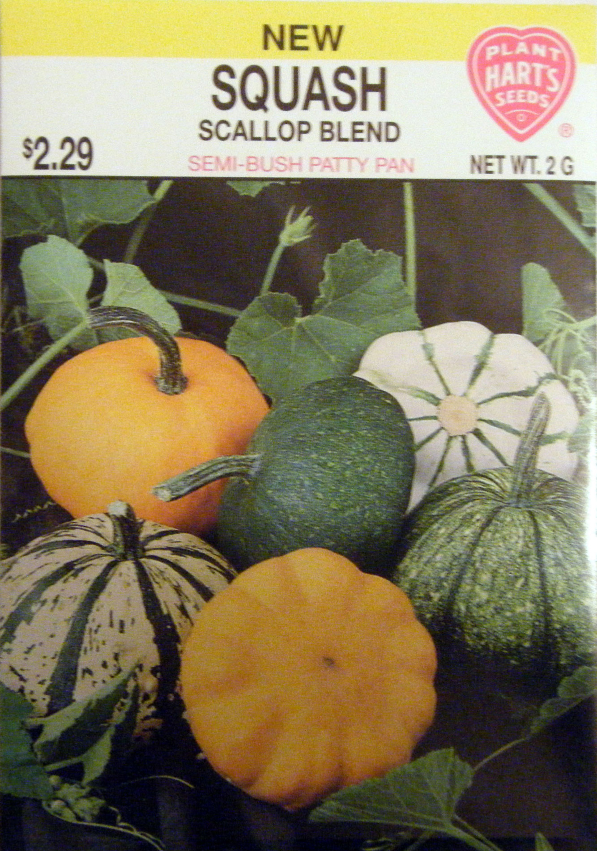 New Variety of Scallop Squash Available