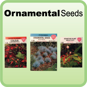 Buy Ornamental Seeds
