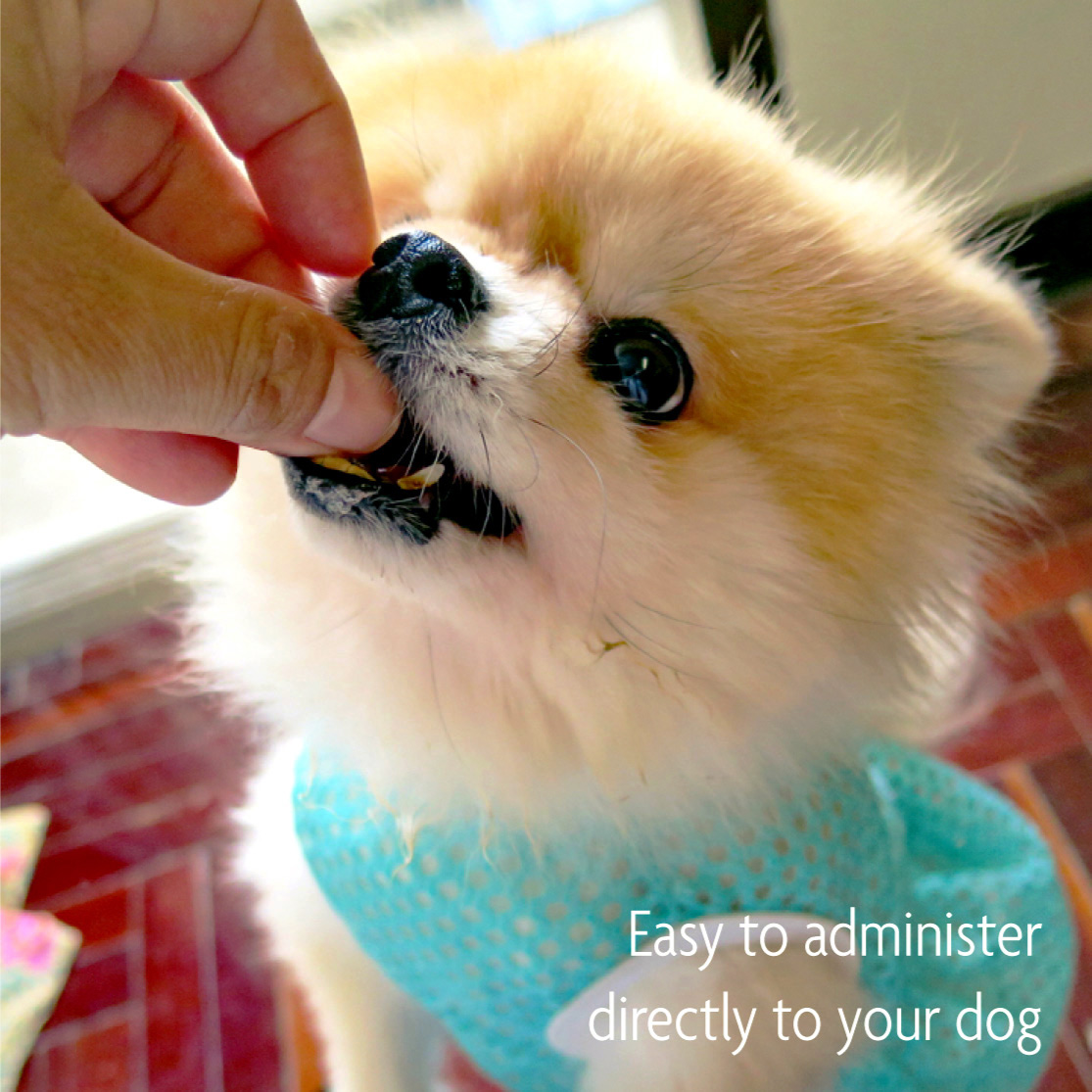 Easy to administer directly to your dog
