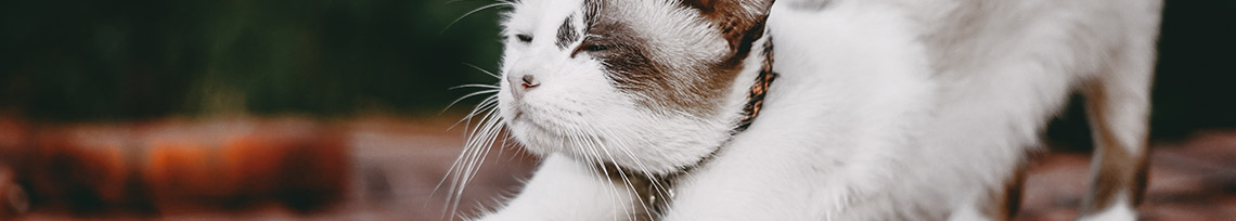 The Best Flea Collars for Cats