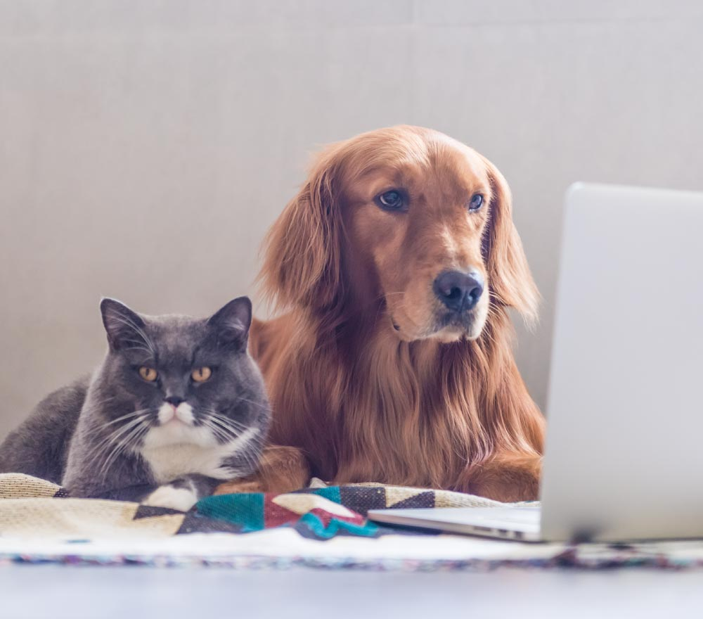 cat and dog researching side effects