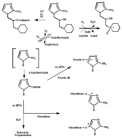 Mechanism for the activation and binding of pimonidazole to hypoxic cells
