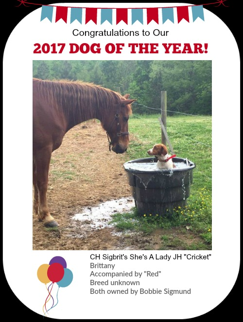 2017 Dog of the Year