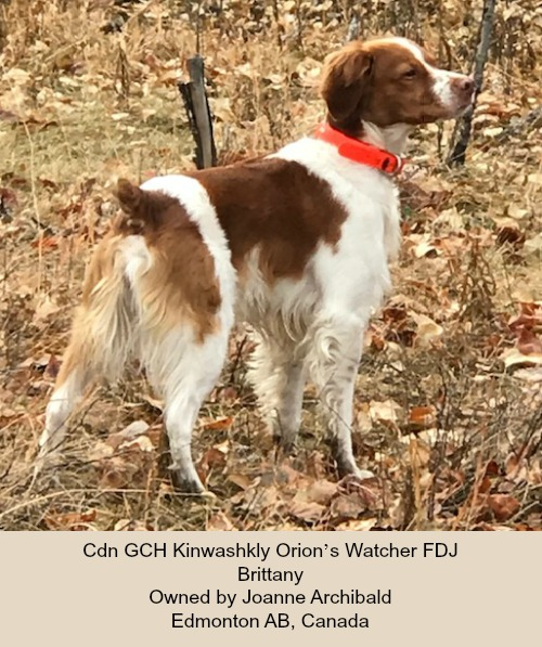 Cdn GCH Kinwashkly Orion's Watcher FDJ