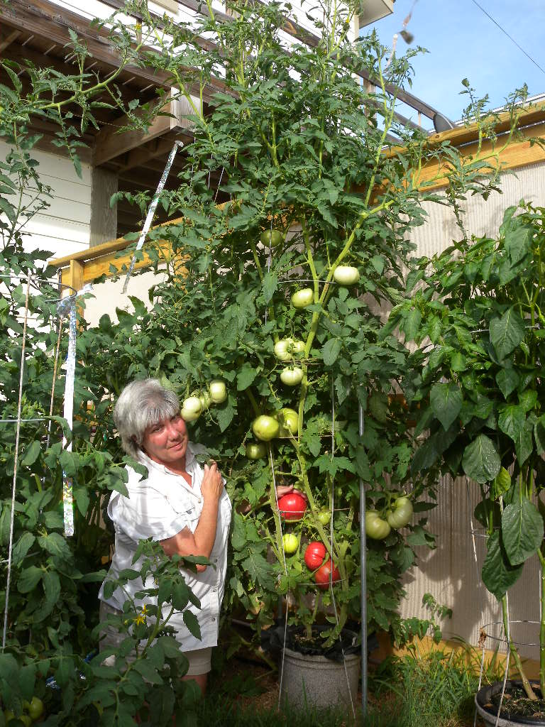 Urban Farm Fertilizers Texas Tomato Food Https Sepyimgcom Ty Cdn Gasscootertassemblyjpg Protected By Ssl Encryption Copyright 2007 Hydrosystems All Rights Reserved The