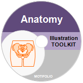 Illustration Toolkit Anatomy