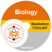 PowerPoint Drawing Toolkit Biology