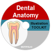 Illustration Toolkit Dental Anatomy