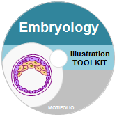 Illustration Toolkit Embryology