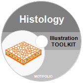 Illustration Toolkit Histology