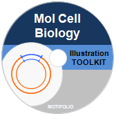 Illustration Toolkit Molecular Cell Biology