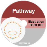 Illustration Toolkit Cell Signaling Pathway