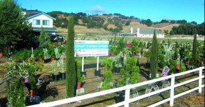 Topiary Nursery Picture