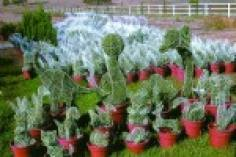 Variety Shaped Topiaries for Nurseries